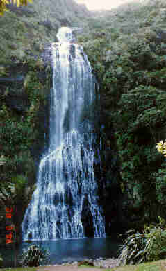 Waterfall in the Waitakeres ( name unknown ), Auckland, N.I. New Zealand